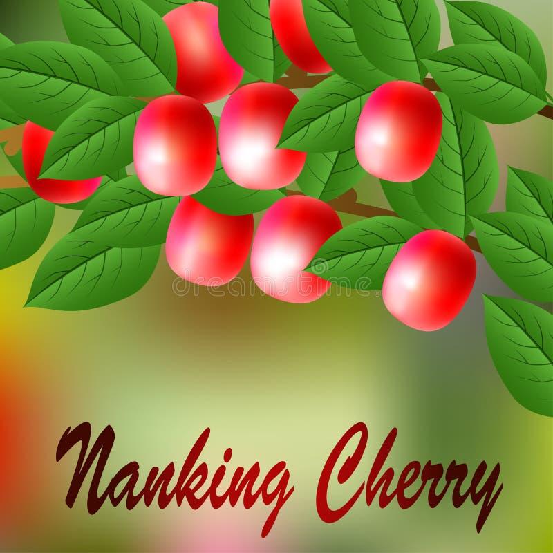 Cereza Roja, Jugosa, Dulce De Nanking En Una Rama Para Su Diseño ...