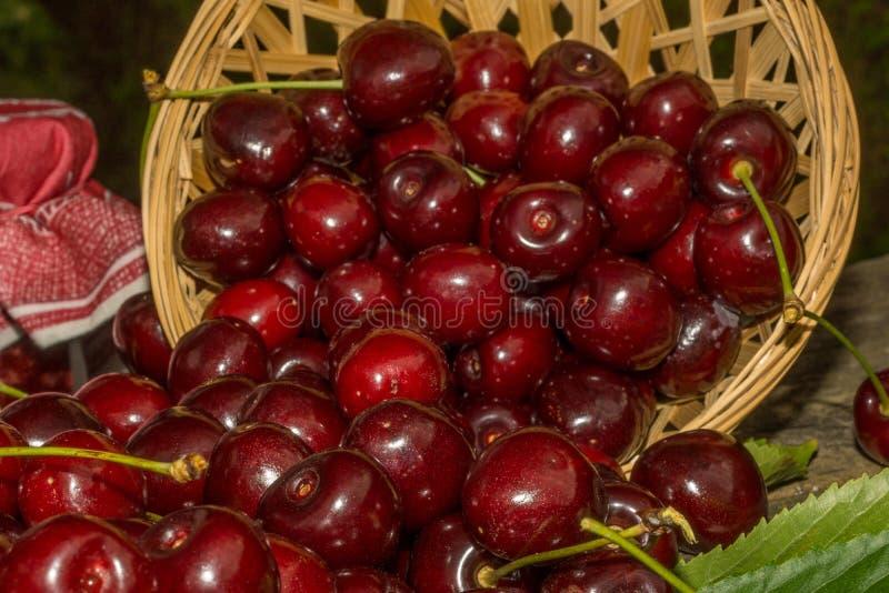 Download Cerezas imagen de archivo. Imagen de cesta, salud, cosecha - 42439693