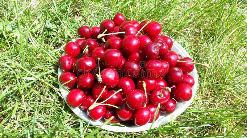 Cerezas dulces rojo oscuro en la placa blanca en hierba verde imagen de archivo libre de regalías