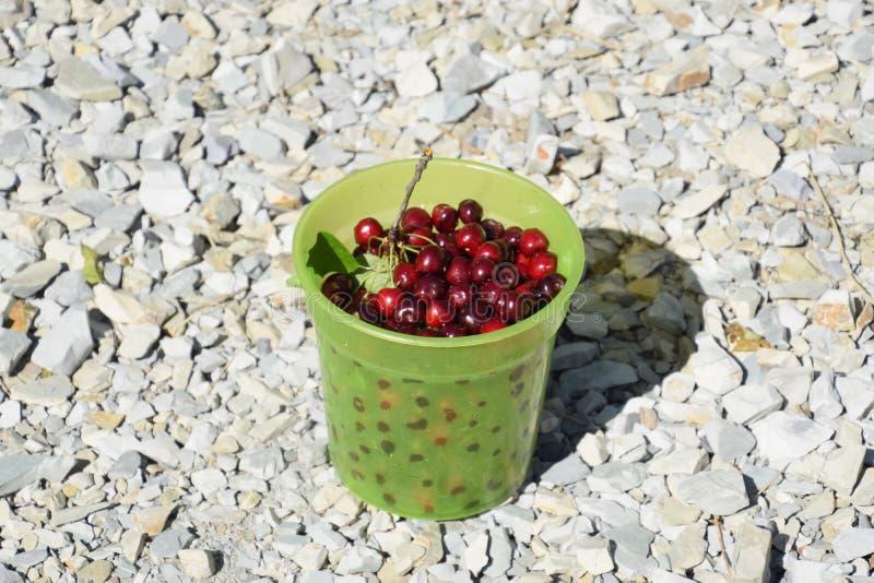 Cerezas en un cubo verde plástico Cereza dulce roja madura foto de archivo libre de regalías