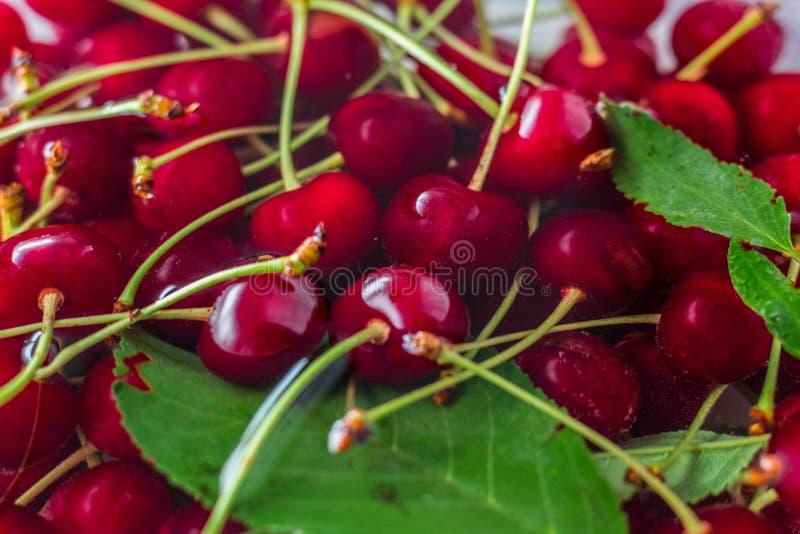 Cerezas rojas en agua con las hojas verdes fotos de archivo