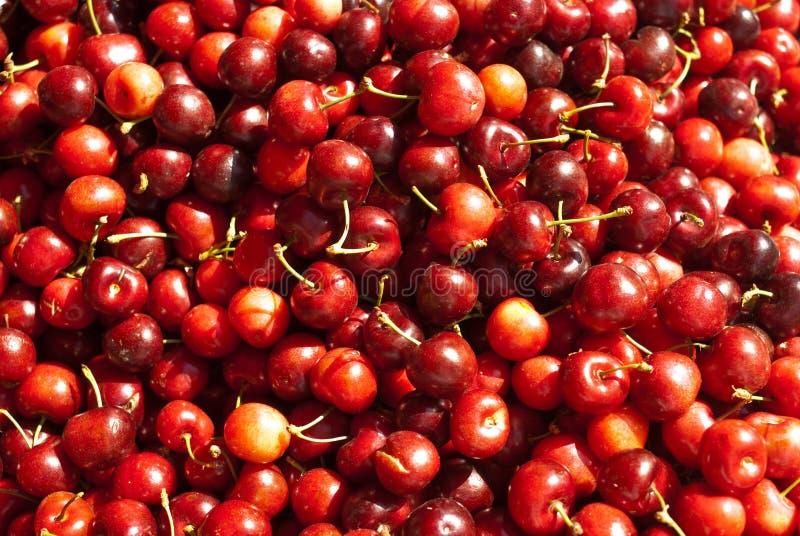 Cerezas rojas orgánicas imagenes de archivo