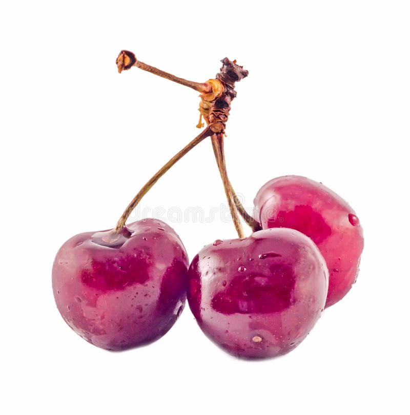 Download Cerezas Rojo Oscuro, Fondo Aislado, Blanco Foto de archivo - Imagen de fruta, objetos: 41920302