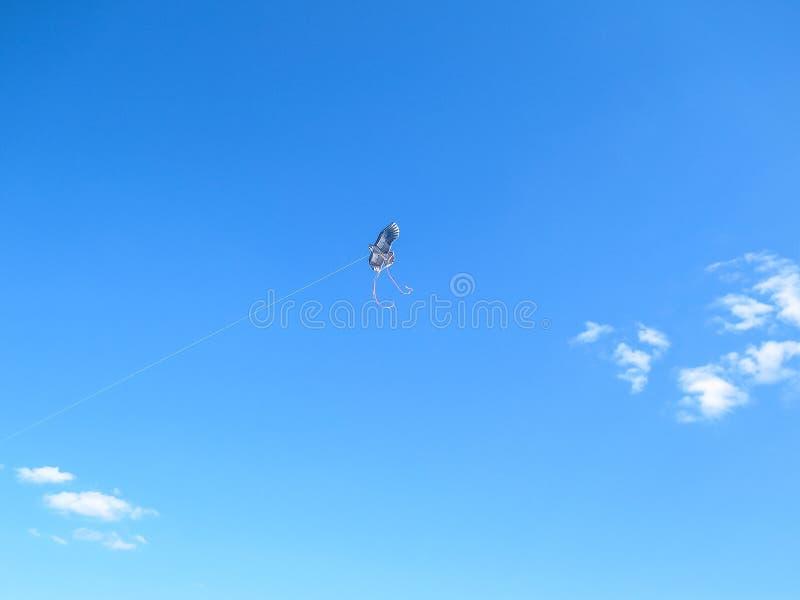 cerf-volant photos stock