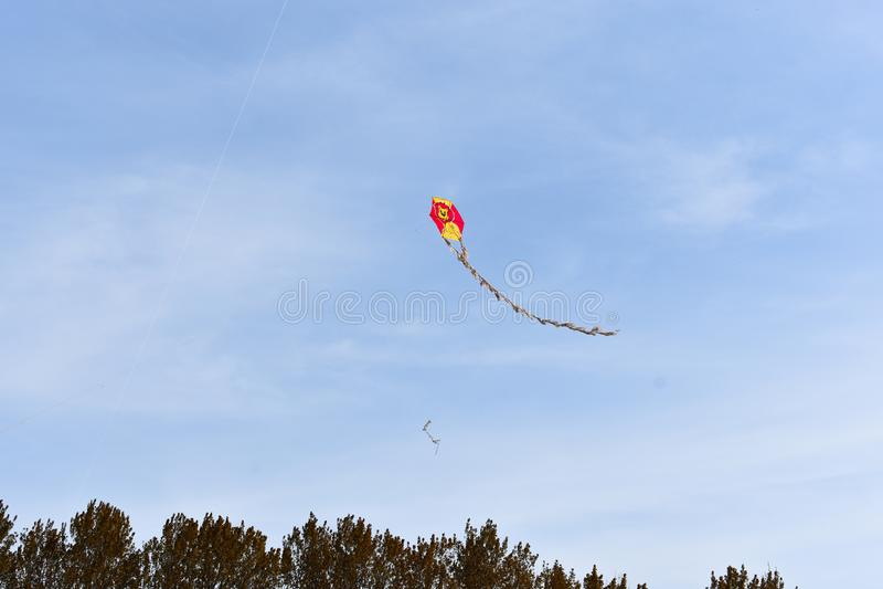 cerf-volant, arbres et fond de ciel photos libres de droits