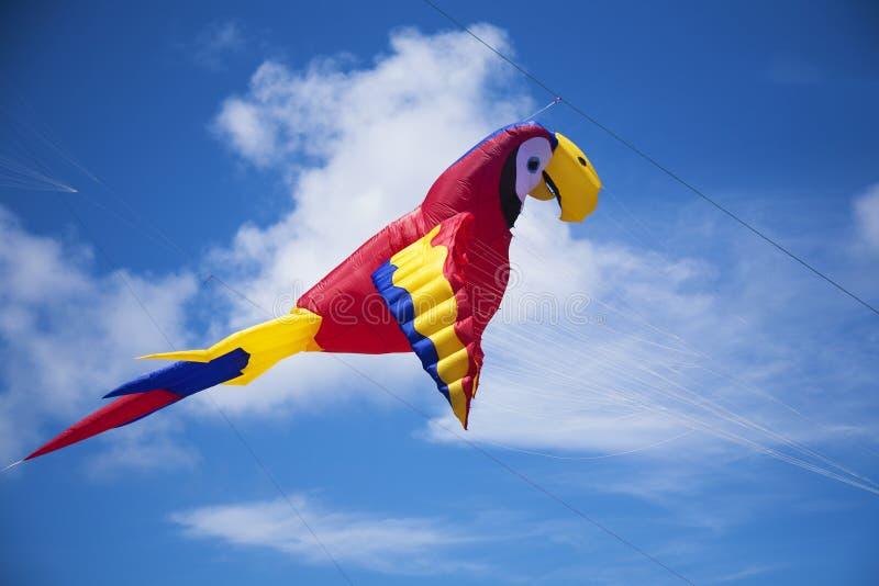 Cerf-volant coloré de perroquet photographie stock