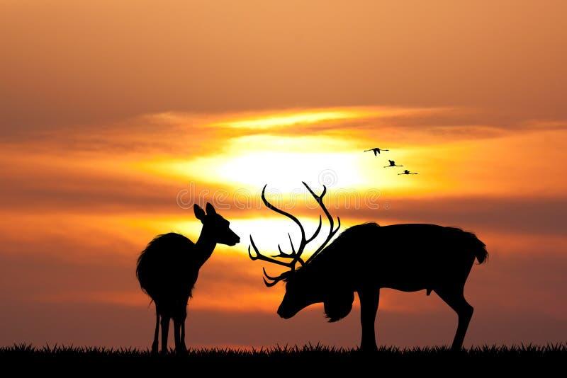 Cerfs communs au coucher du soleil illustration de vecteur