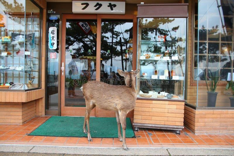 Cerfs communs dociles de Miyajima image stock