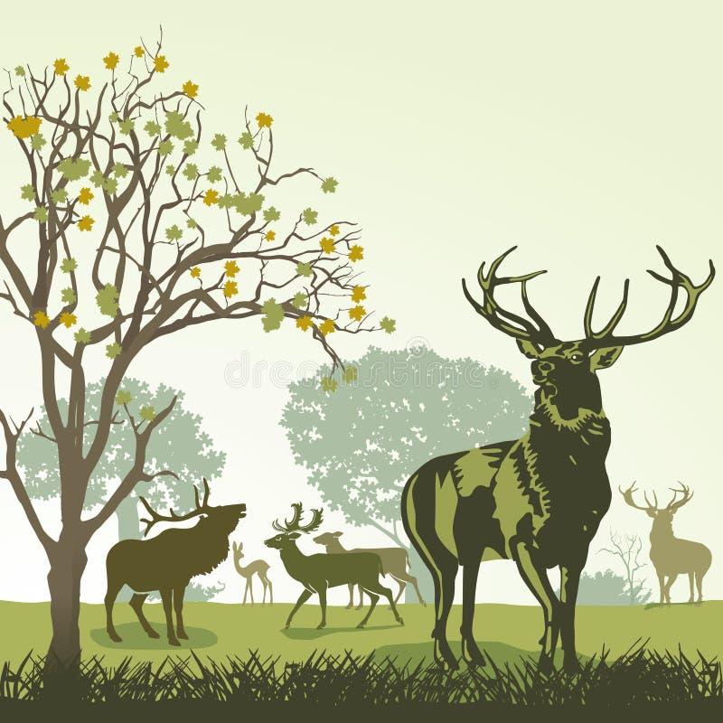 Cerfs communs et faune illustration stock