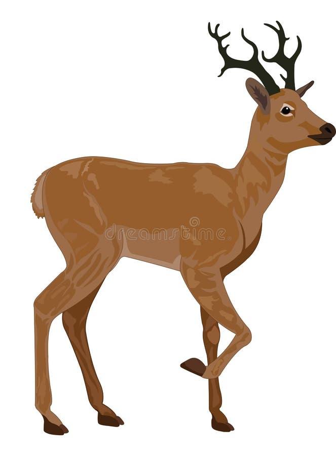 Cerfs communs, illustration illustration de vecteur