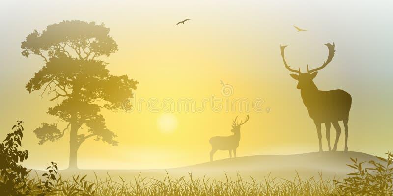 Cerfs communs mâles de mâle illustration stock