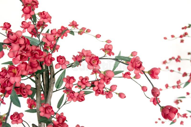 Cerise fleurissante japonaise rouge image stock