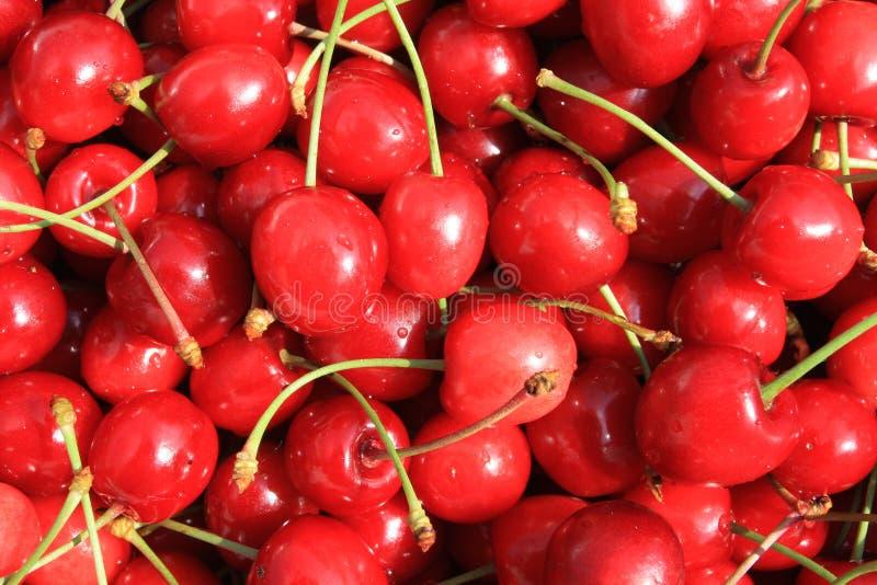 Cerise fraîche rouge image libre de droits