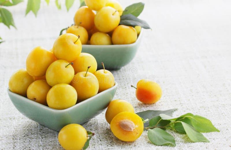 Cerise-prune jaune image libre de droits