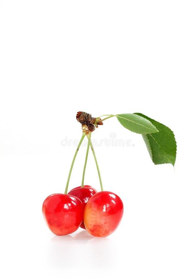Cerise rouge fraîche au-dessus de blanc photos stock