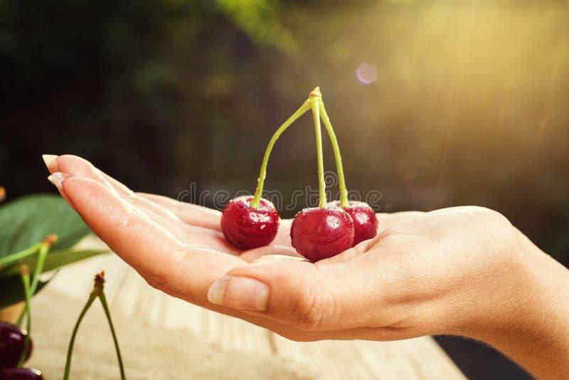 Cerise sur la main Table en bois de Cherrieson Cerise rouge Swe frais images libres de droits