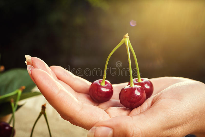 Cerise sur la main Table en bois de Cherrieson Cerise rouge Swe frais photo stock