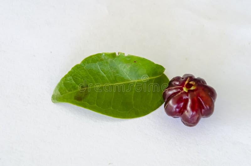 Cerises et feuilles d'isolement de cerise de Cayenne photographie stock