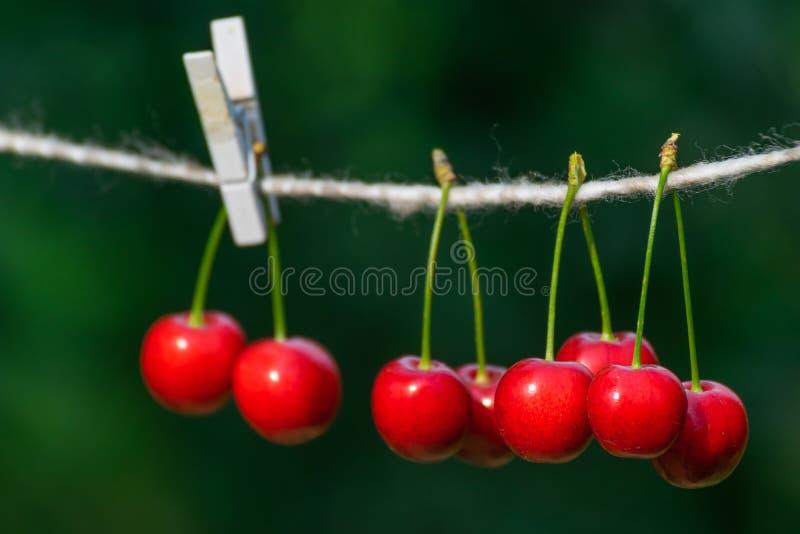 Cerises sur la ficelle dans le jardin un jour ensoleillé image libre de droits