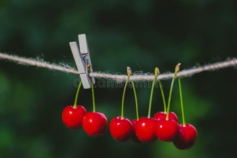 Cerises sur la ficelle dans le jardin un jour ensoleillé photos libres de droits