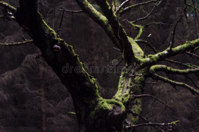 Cerisier images stock