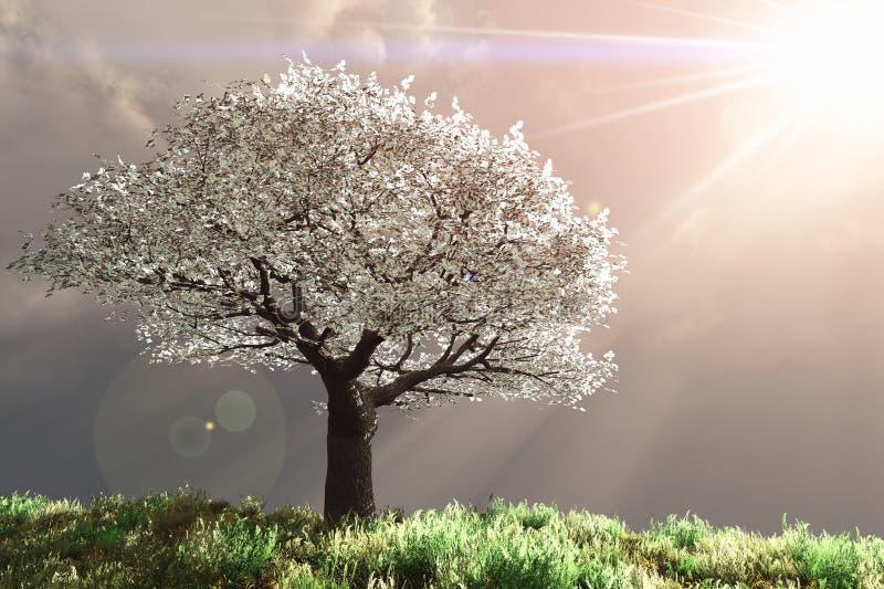 Cerisier avec des rayons de Dieu images libres de droits