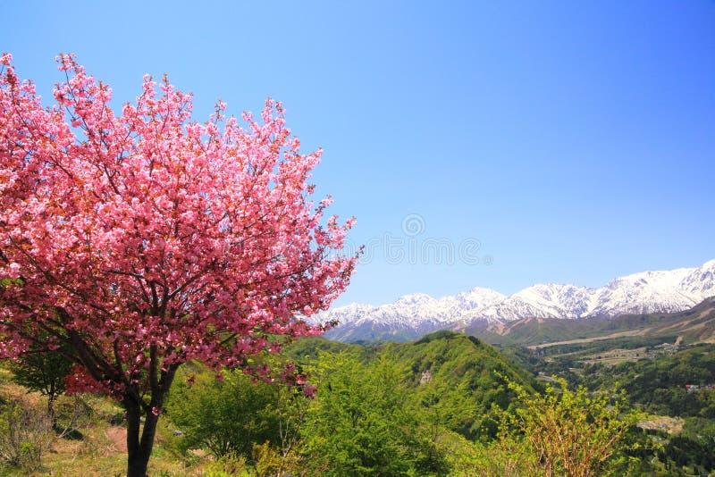 Cerisier et Alpes du Japon photographie stock