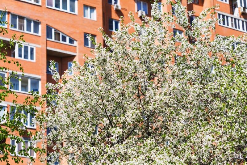 Cerisier fleurissant et appartement urbain hous photos stock