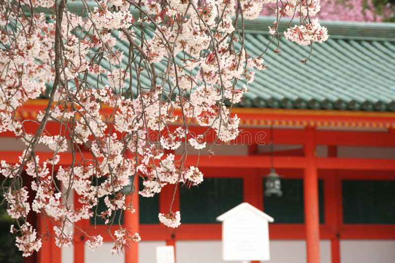 Cerisiers de Kyoto photos stock
