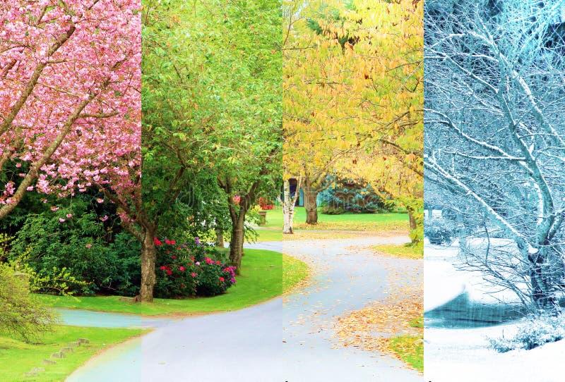 Cerisiers en fleur photo stock