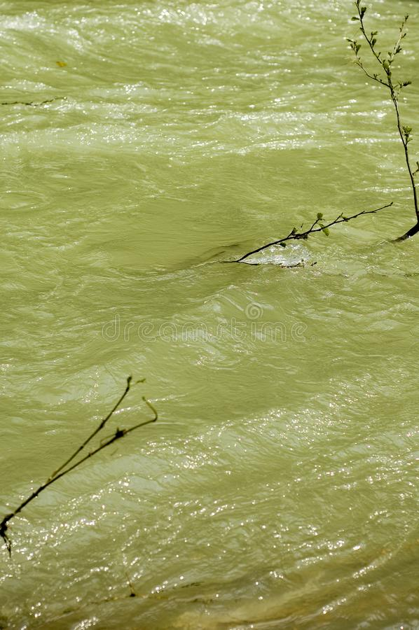 Cerna River Twigs stock photo