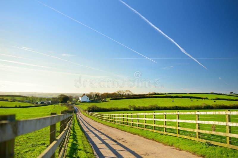 Cerque sombras da carcaça em uma estrada que conduz à casa pequena entre campos córnicos cênicos sob o céu azul, Cornualha, Ingla imagem de stock