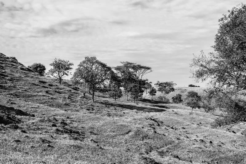 Cerrado en het platteland royalty-vrije stock fotografie