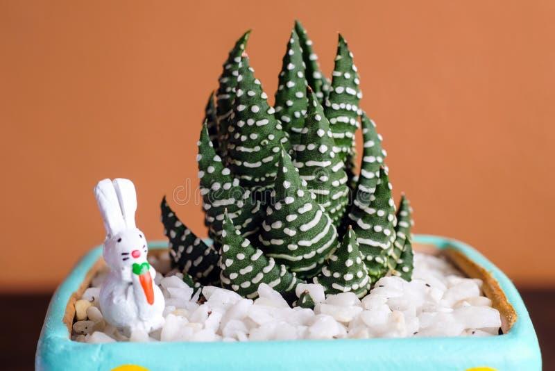 Cerrado encima de imagen del cactus hermoso con el conejo de cerámica en color imágenes de archivo libres de regalías