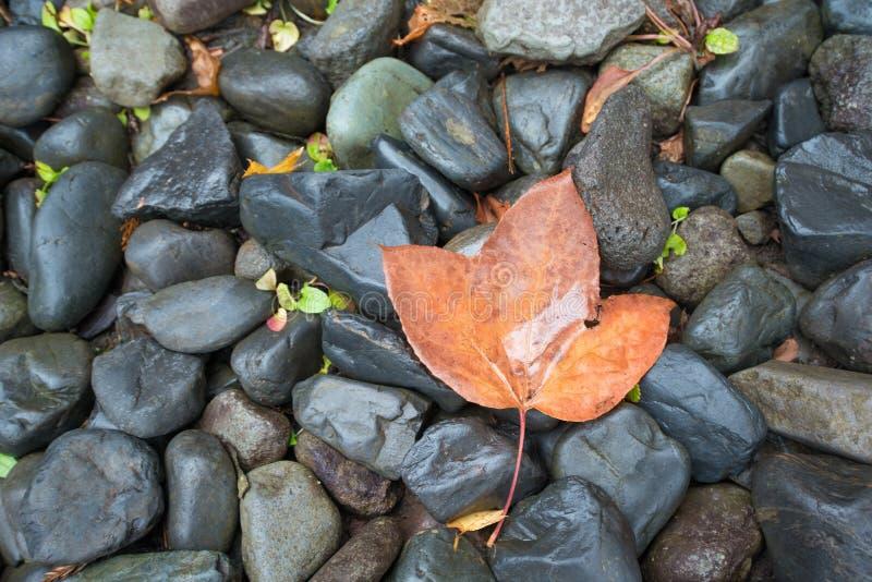 Cerrado encima de la hoja seca en piso de piedra negro fotografía de archivo