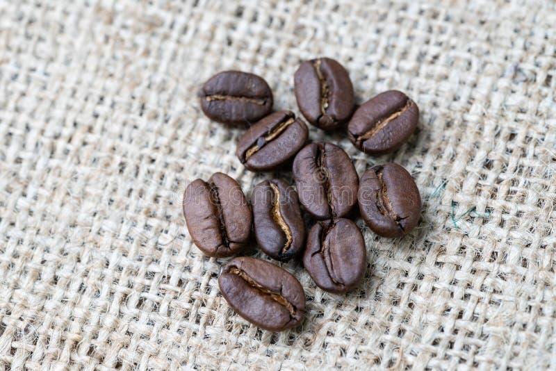 Cerrado para arriba de los granos de café asados en fondo del bolso del yute, seleccionando la mejor calidad del aroma para la be foto de archivo libre de regalías