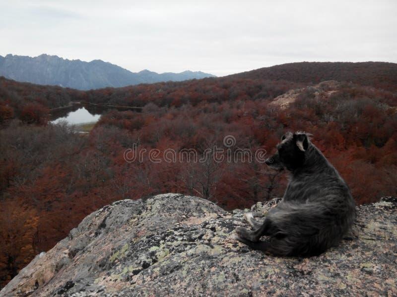 Cerro Lindo - EL Bolson lizenzfreie stockbilder