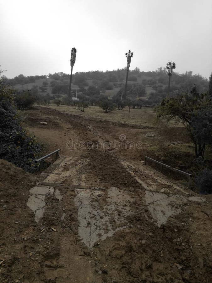 Cerros przeciwu palmeras falsas obrazy stock
