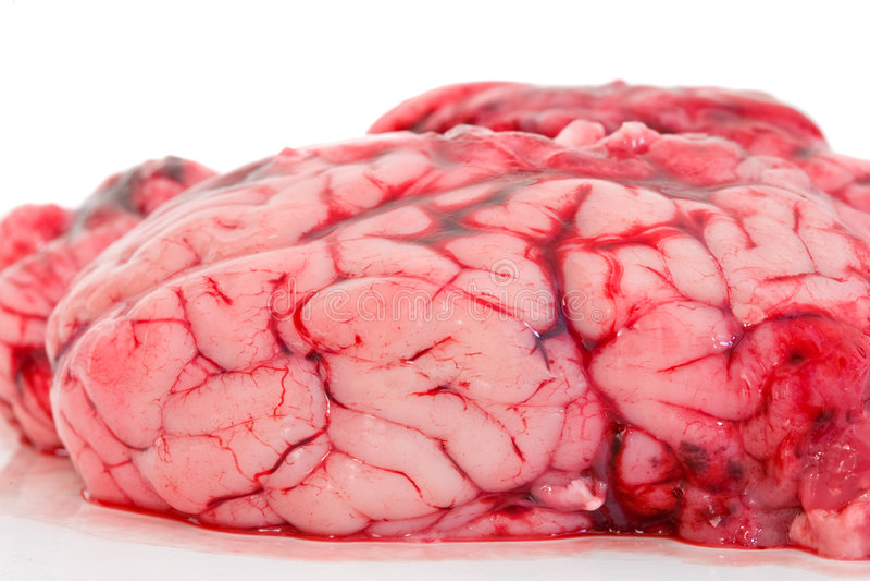 Cerveau photos stock