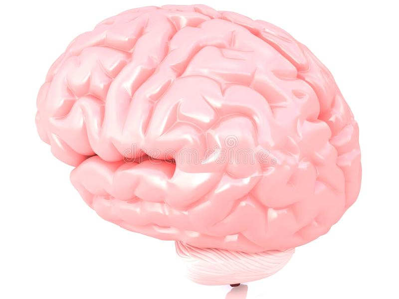 cerveau 3D humain illustration de vecteur