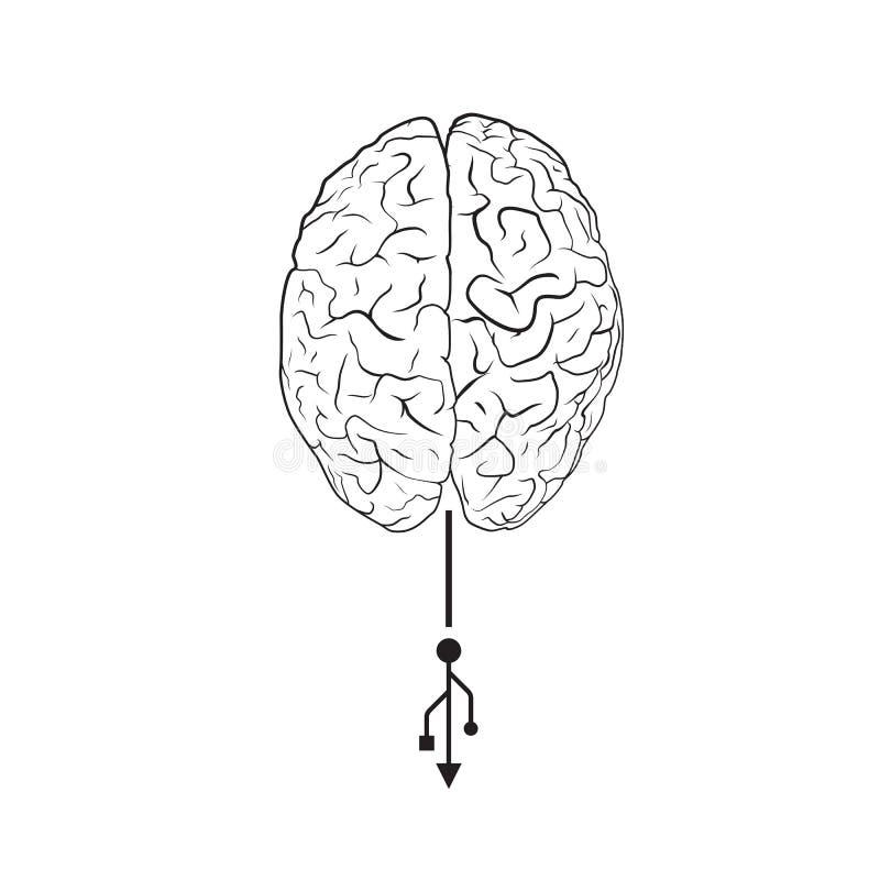 Cerveau avec la marque d'usb illustration stock