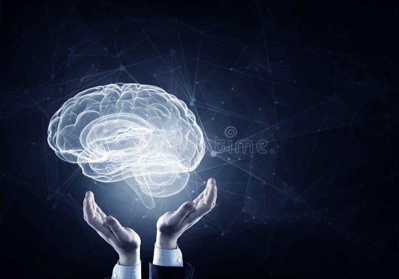 Cerveau dans des mains masculines image stock