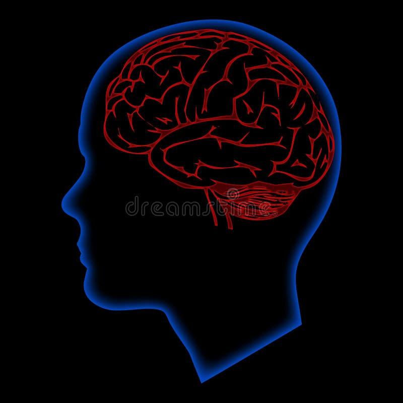 Cerveau de Humna illustration stock