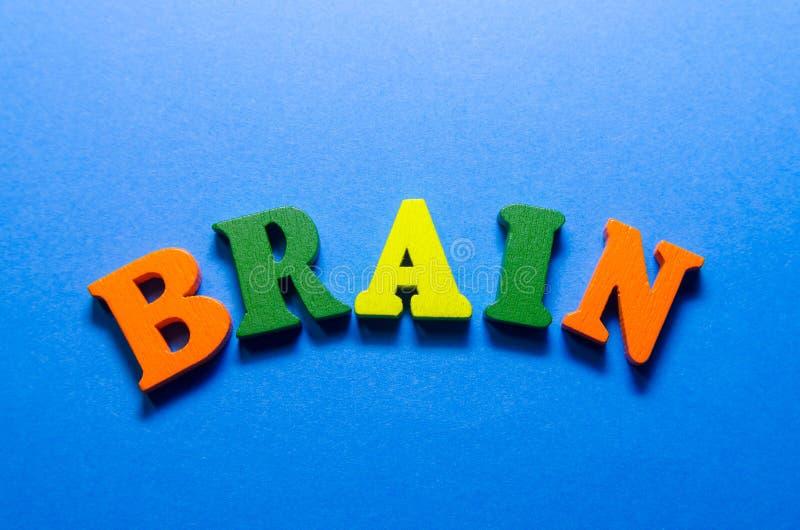 Cerveau de Word avec les lettres en bois images stock