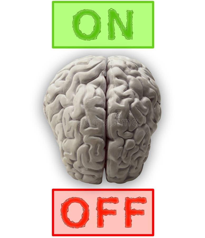 Cerveaux illustration de vecteur