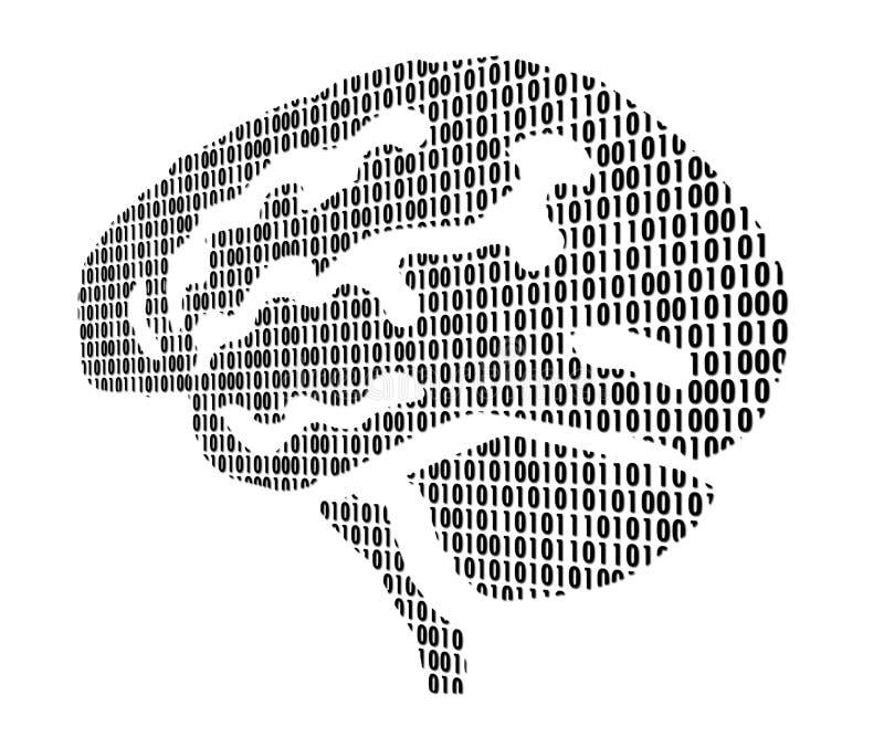 Cerveaux illustration stock