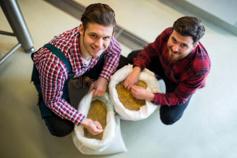 Cerveceros que examinan granos foto de archivo