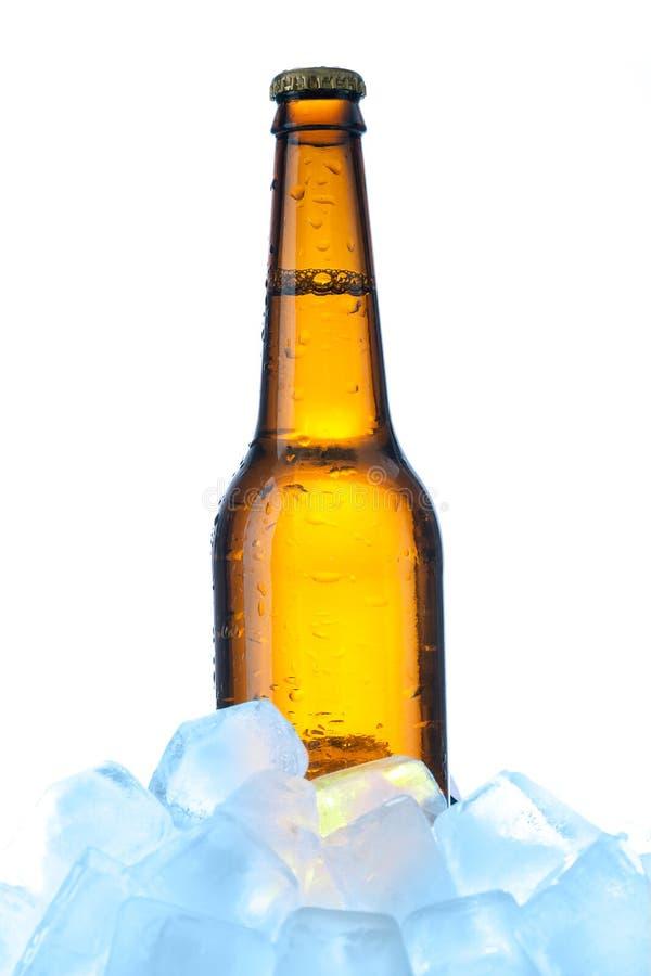 Cerveja com gelo foto de stock royalty free