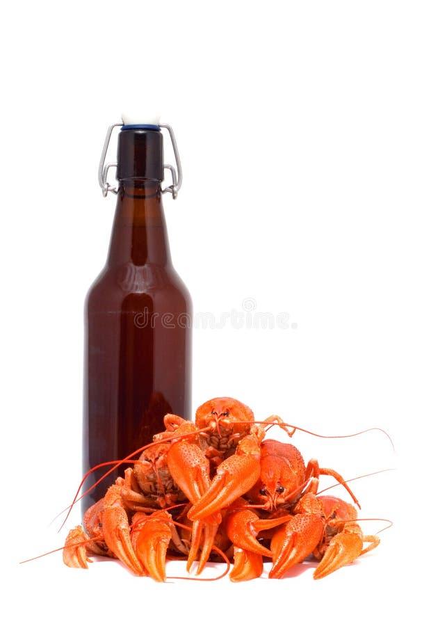 Cerveja e lagostins. fotos de stock