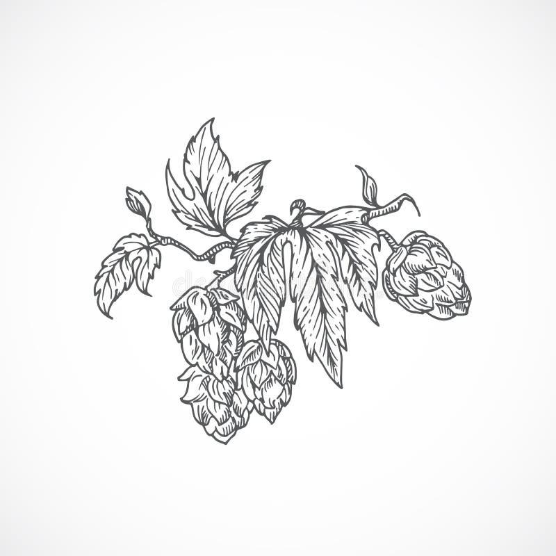 A cerveja Hops ramo Esboço abstrato Ilustração desenhada mão do vetor ilustração stock